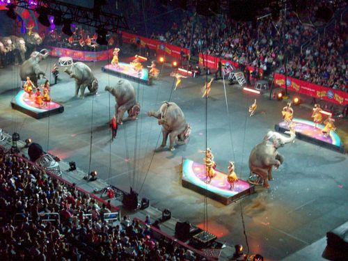 6-24 circus