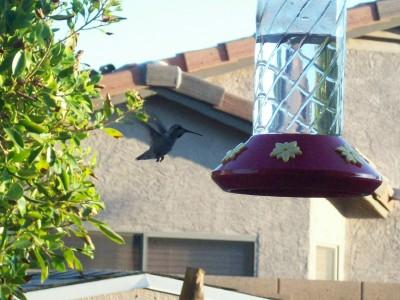 Humminigbird