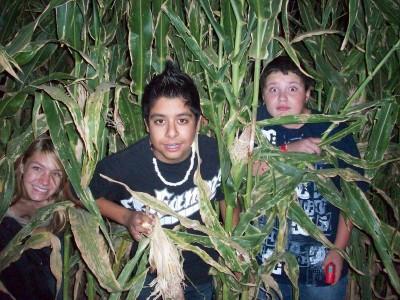 Corn maze 5