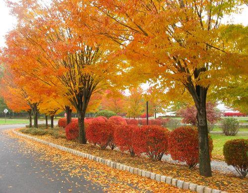 Autumn-leaves-photos1