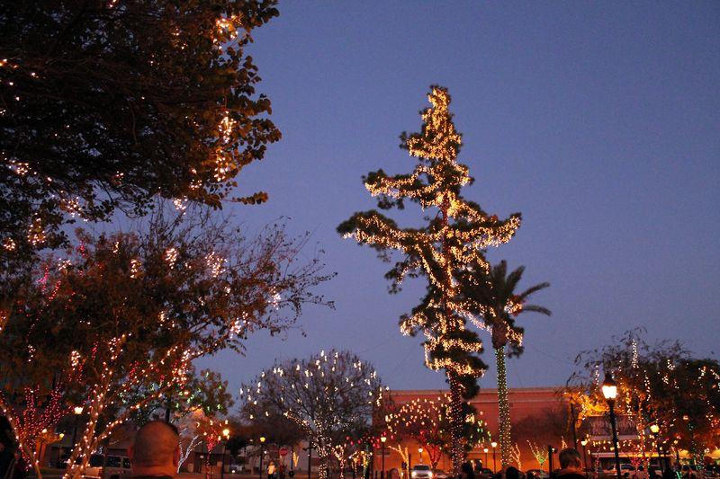 Glendale Glitters trees