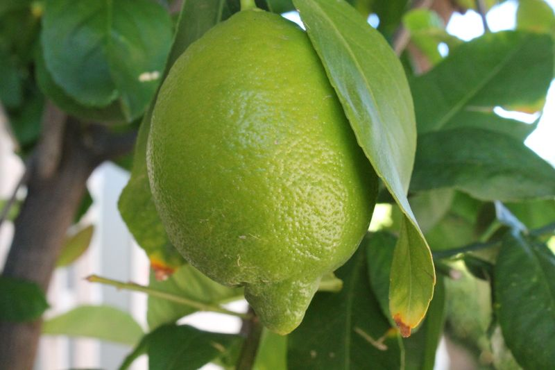 Lemon 2 RAW