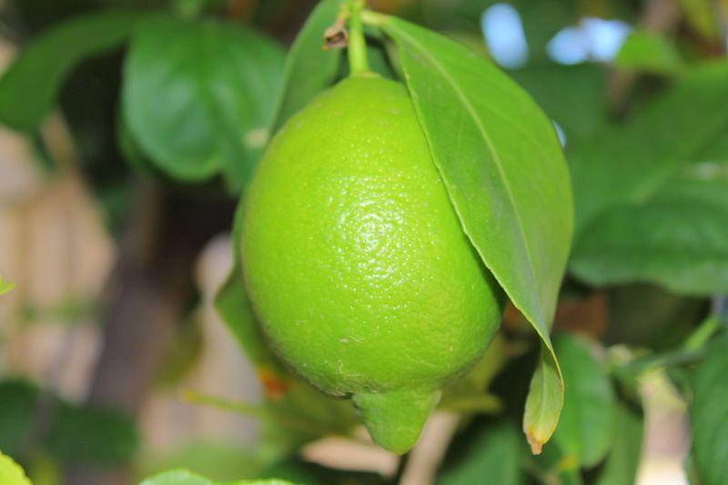 Lemon raw2