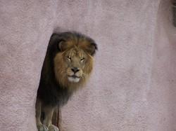 Zoo_9