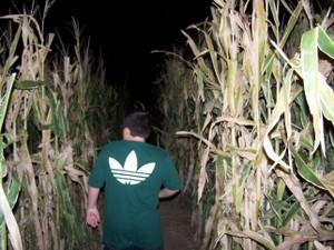 Fear_farm_5