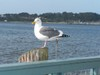 Bodega_bay_bird