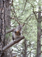 Hungry_squirrell_2