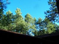 Roof_top